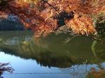 201121-19 鎌北湖.jpg
