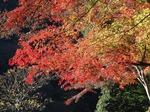 201121-21 鎌北湖.jpg