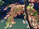 201121-23 鎌北湖.jpg