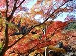 201121-27 鎌北湖.jpg