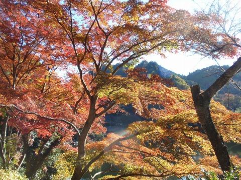201121-30 鎌北湖.jpg