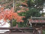201128-34 能仁寺.jpg