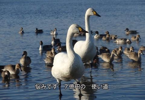 210111-120s 川島.jpg