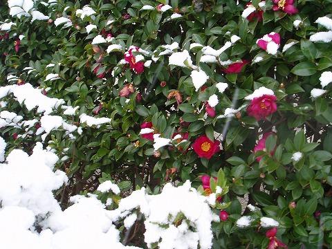 210203-100 雪.jpg