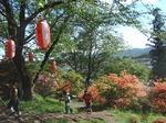 210426-117 鳩山つつじ祭り.jpg