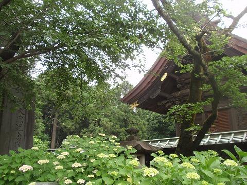 210605-69 箭弓稲荷神社.jpg