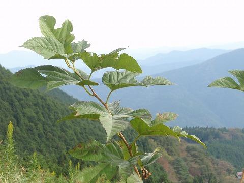 211020-34 堂平山からの秩父連山.jpg