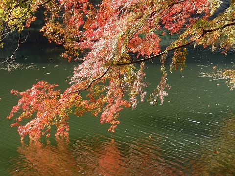 211110-107 鎌北湖.jpg