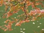 211110-125 鎌北湖.jpg