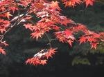 211110-129 鎌北湖.jpg
