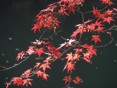 211110-130 鎌北湖.jpg