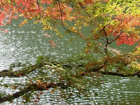 211110-97 鎌北湖.jpg