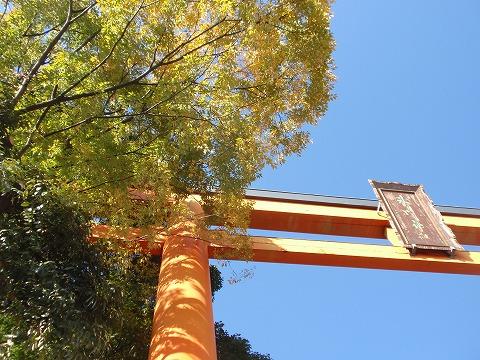 211123-164 川越氷川神社.jpg