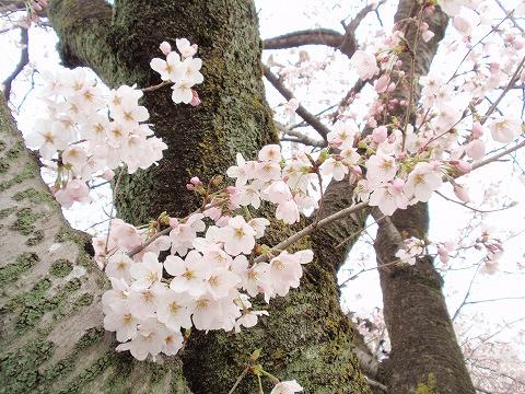 220404-68 高倉神社.jpg