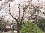 220404-70 高倉神社.jpg