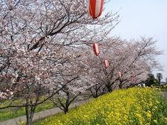 220406-94 さくら提公園.jpg