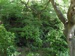 220602-14 椿山荘.jpg