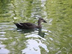 221016-61 水上公園.jpg
