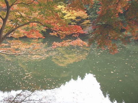 221116-80 鎌北湖.jpg
