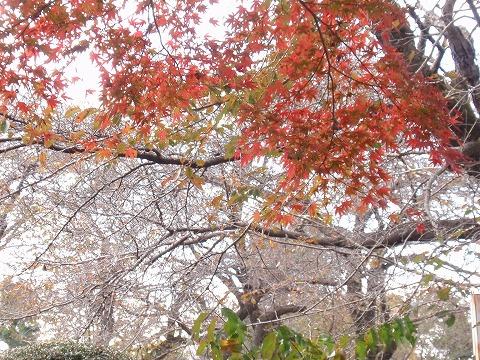 221120-111 東京農大.jpg