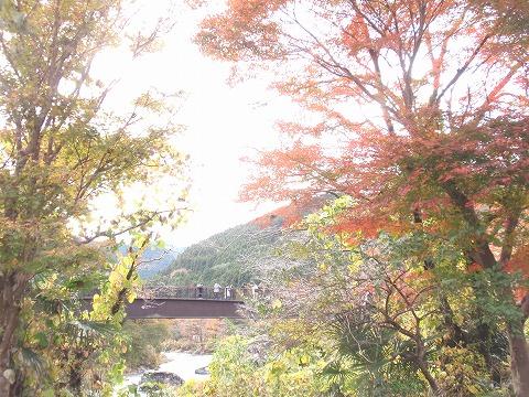 221123-77 御岳渓谷.jpg
