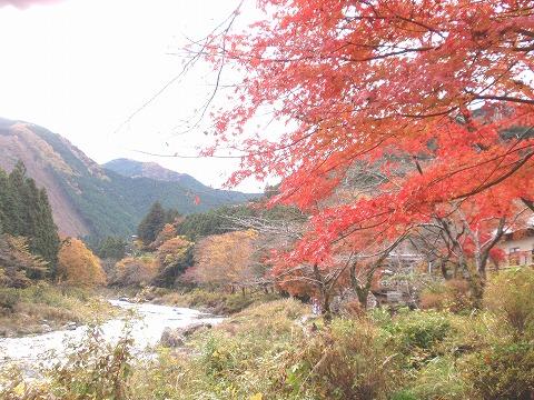 221123-92 御岳渓谷.jpg
