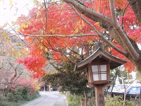 221125-164 高麗神社参道.jpg
