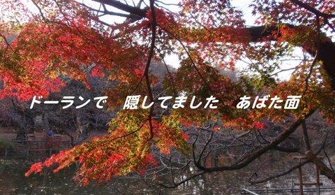 221201-152a 井之頭公園.jpg