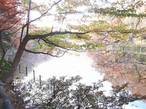221201-160 井の頭恩賜公園.jpg