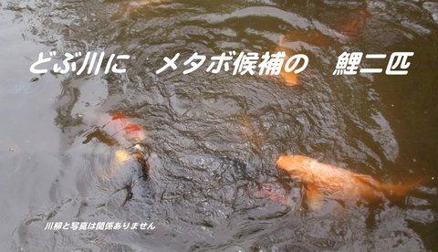 230505-108a 習志野.jpg