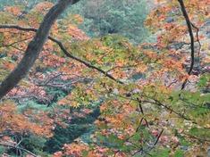 231118-02 鎌北湖.jpg