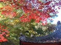 231125-116 安楽寺.jpg