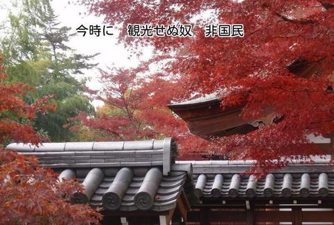 231129-154s 能仁寺.jpg