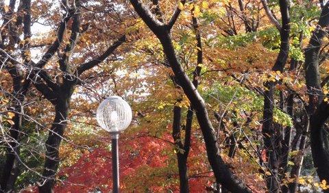 231209-176b 大和田公園.jpg