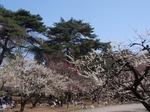 240329-38 大宮公園.jpg