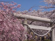 240412-02 高倉日枝神社.jpg