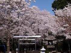 240412-06 高倉日枝神社.jpg