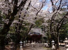 240412-15 高倉日枝神社.jpg