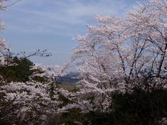 240413-60 物見山公園.jpg