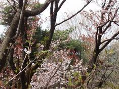 240413-62 物見山公園.jpg