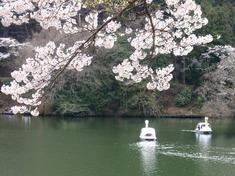 240415-75 鎌北湖.jpg
