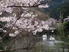 240415-80 鎌北湖.jpg