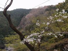 240416-68 鎌北湖.jpg