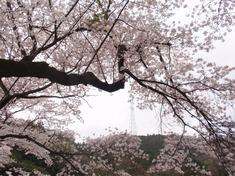 240416-83 鎌北湖.jpg