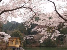 240416-87 鎌北湖.jpg