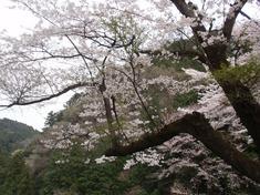 240416-91 鎌北湖.jpg