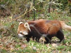 240425-76 こども動物自然公園.jpg