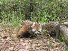 240425-79 こども動物自然公園.jpg