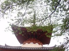 240430-71 喜多院.jpg