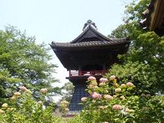 240608-205 能護寺.jpg